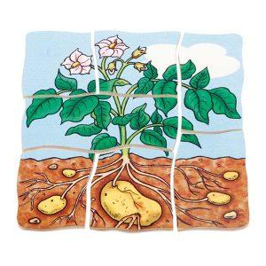Beleduc-krompir-v-nivojih