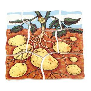 Krompir-v-nivojih